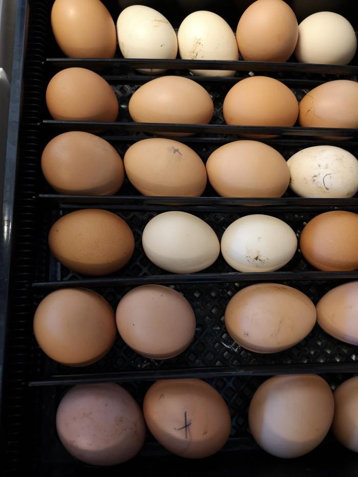 20 stycken ägg.