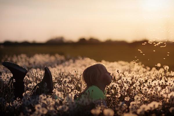 Foto på flicka som ligger på ett fält med maskrosor.
