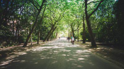 En bred grusväg genom en park. Vägen omges av träd med stora trädkronor. Flera cyklister cyklar bort genom parken.