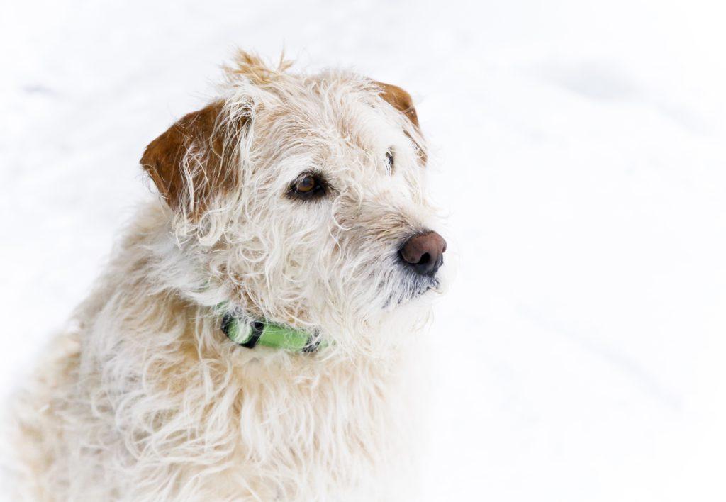 Arthur är en ganska rufsig hund med liggande öron. Han har snälla ögon och en gullig nos.