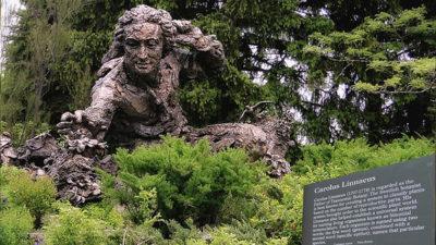 Foto på en skulptur av Carl von Linné