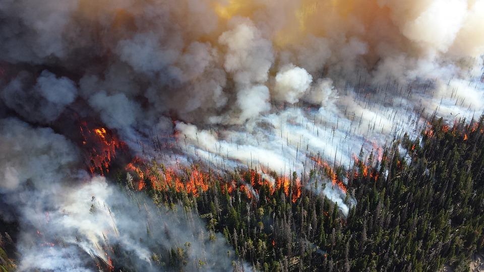 En skog som brinner