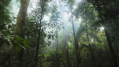 Foto från en regnskog