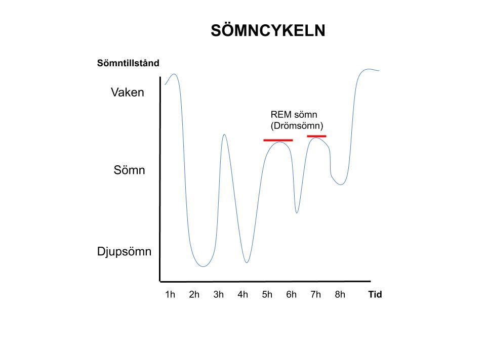 Ett diagram över hur en sömncykel kan se ut
