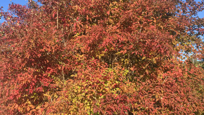 Foto på färgsprakande träd i rött och orangea.
