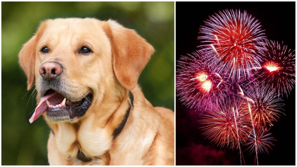 En hund och nyårsraketer.