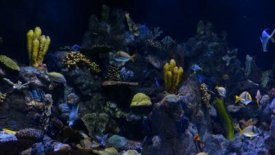 Ett korallrev