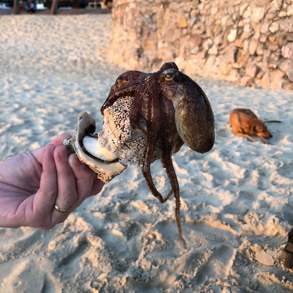 En bläckfisk som krupit ur sitt gömställe som var en gigantisksnäcka.