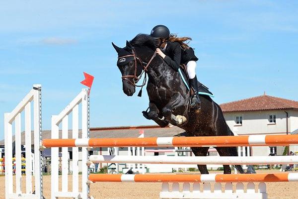 En svart häst med ryttare som hoppar över ett hinder.
