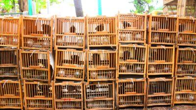 Fåglar i bur