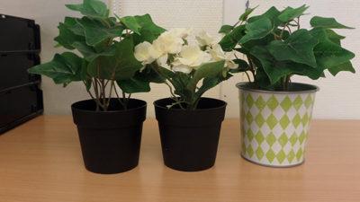 Ett foto på tre krukväxter.