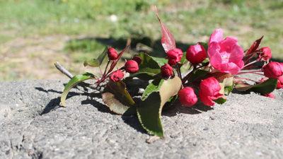 En blomsterkvist som ligger på en sten.