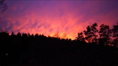 Foto på en solnedgång över trädtopparna.