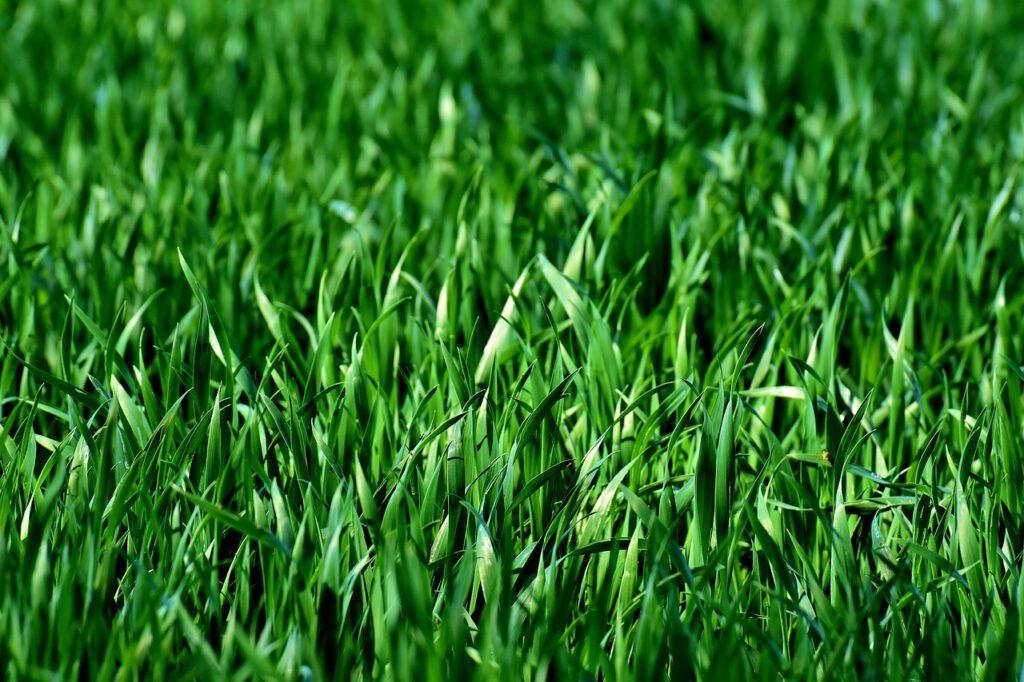 snart kan människor kanske äta gräs.