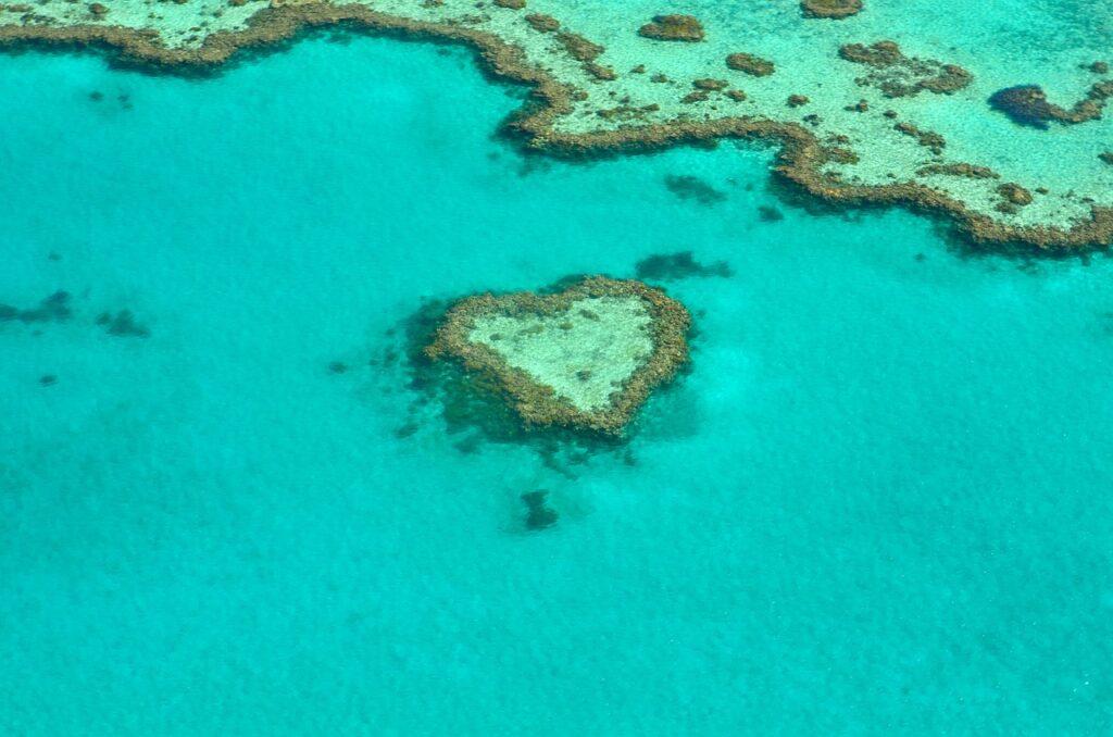 Forskare har hittat ett nytt koralrev