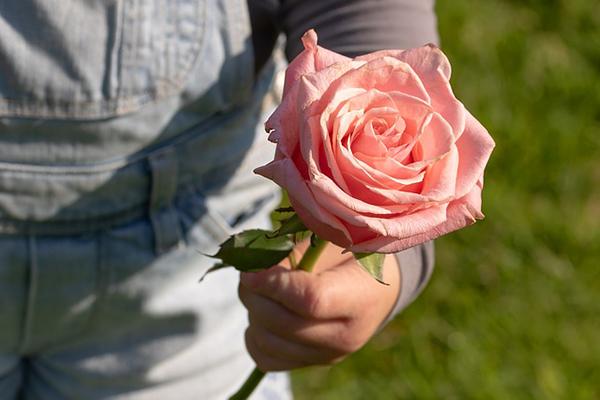 Ett barn som håller i en rosa ros.