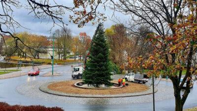 En stor grön gran i mitten av en rondell i Ronneby.