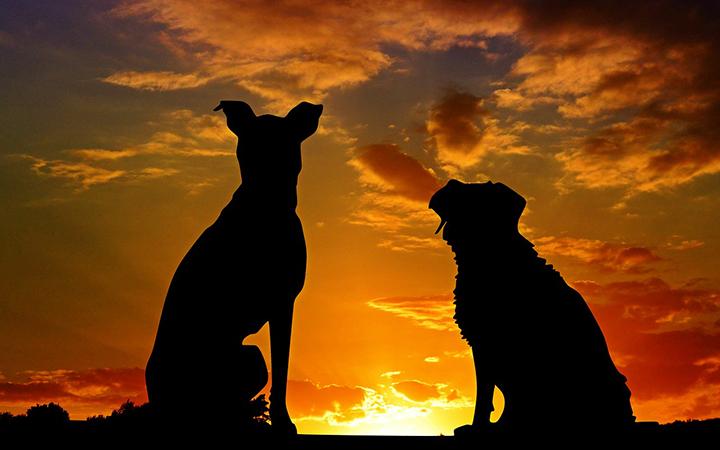Två hundar i solnedgången.