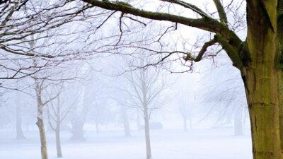 Foto på kala träd och dimma.