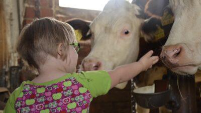 Ett barn som klappar kor
