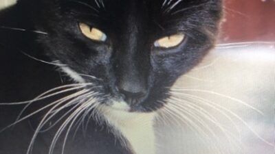 En svart katt