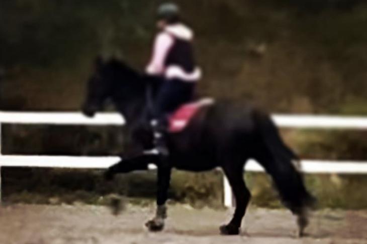 En häst med ryttare.