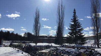 En cykelparkering. Snö på marken men solen skiner från en blå himmel.