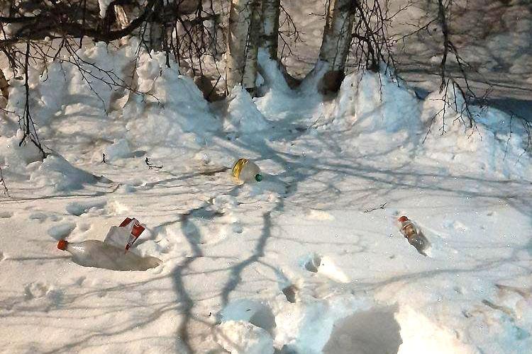 Burkar som ligger i snön vid en skog.