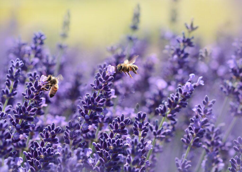 Bin som pollinerar