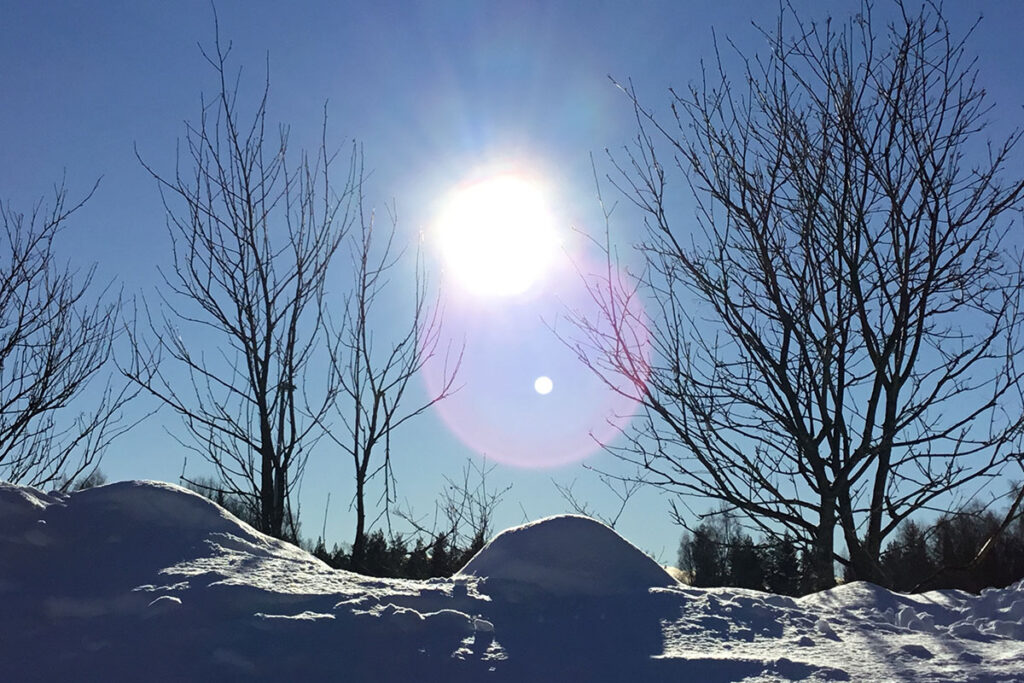 Solen skiner på träd och snö.