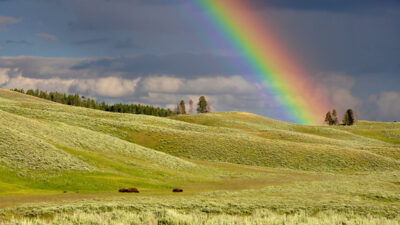 En regnbåge som syns över gröna kullar.