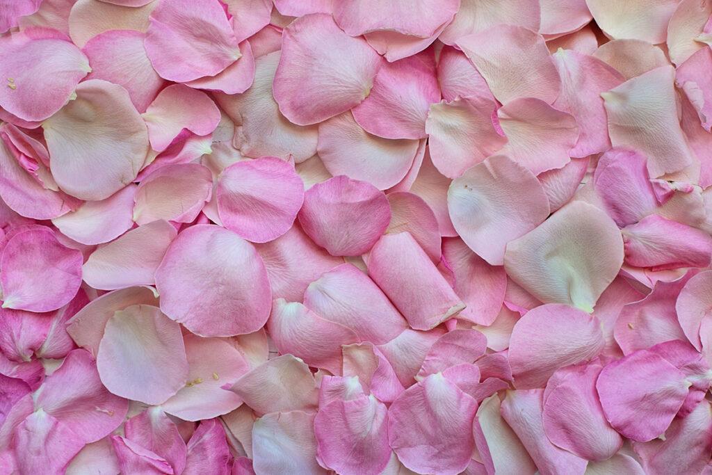 rosa blomblad