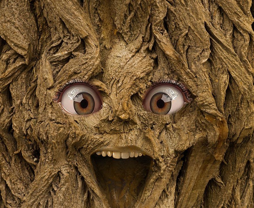 Har du sett ett knasigt träd?