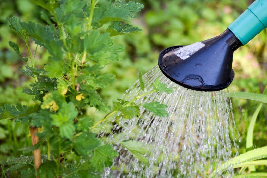 Nu är det viktigt att spara på vattnet.