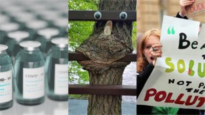 Collage på vaccin, träd och en demonstration